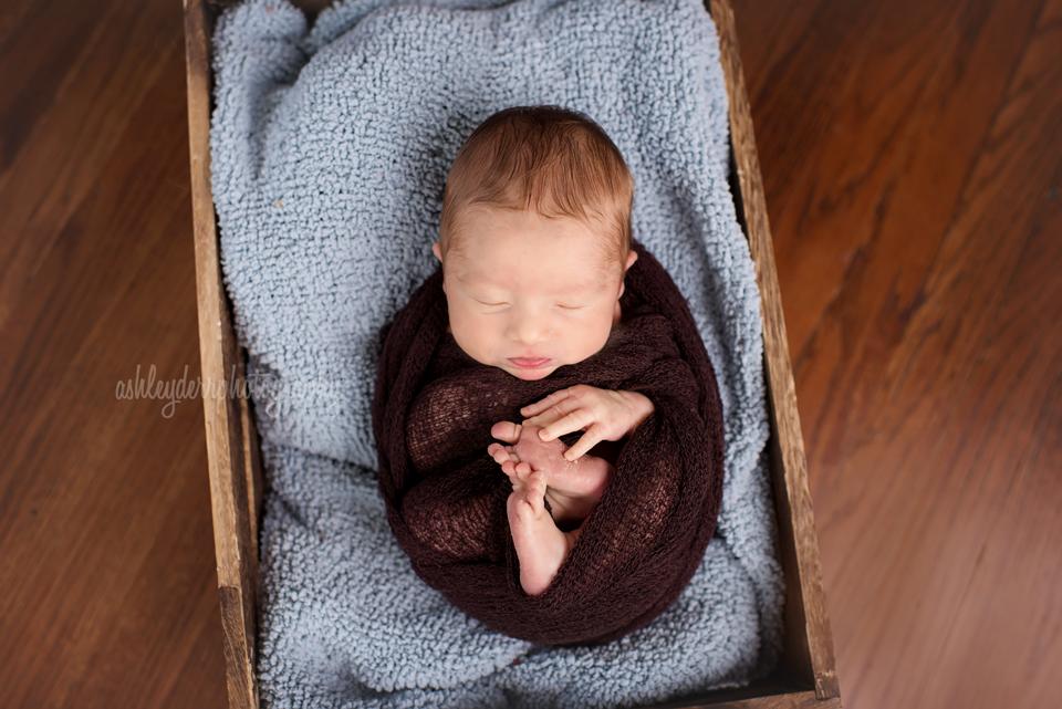 apollo newborn infant photographer